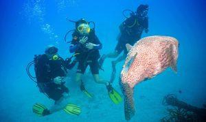 Scuba Diving for Children Koh Tao