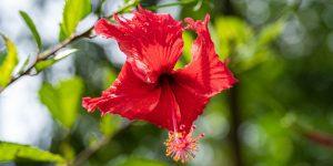 Koh Tao Flowers
