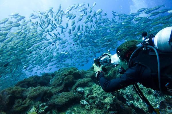 Underwater Photography Koh Tao