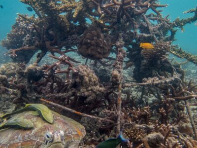 New Heaven Reef Conservation